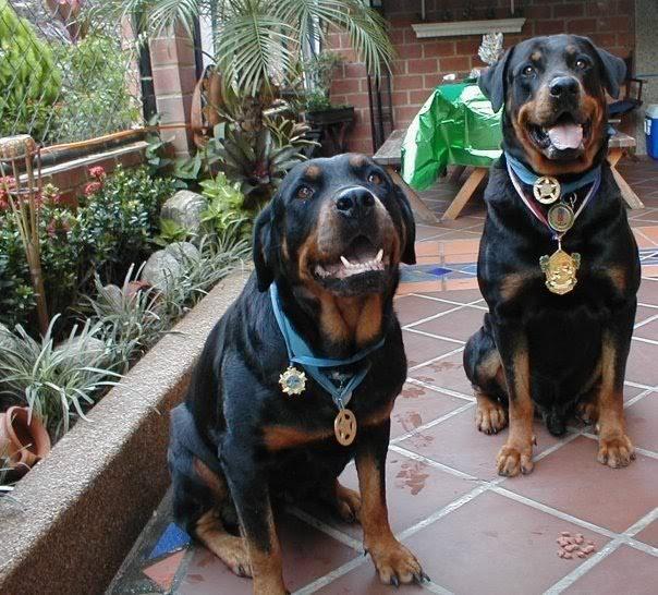 orion-perro-heroe-vargas-venezuela