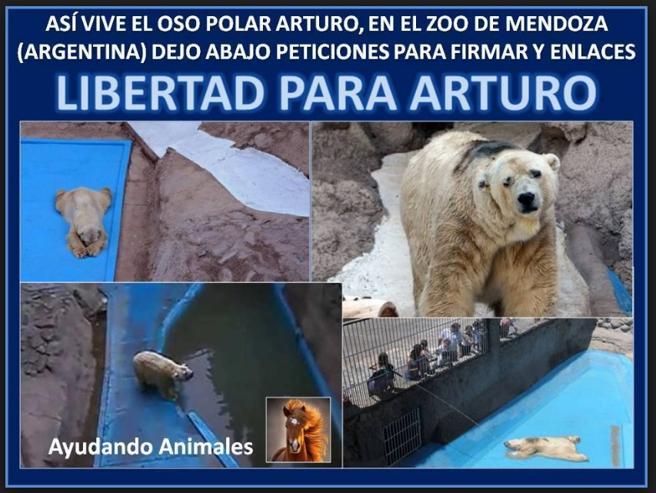 Uno de los carteles de petición de la liberación del oso Arturo, en 2015 (LV)