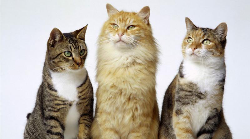 Esterilizaciones solidarias de gatos y gatas