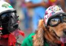 Disfruta estos carnavales con tu animal de compañía