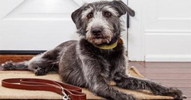 Cuarentena: Cómo sacar a tu mascota en tiempos de COVID-19