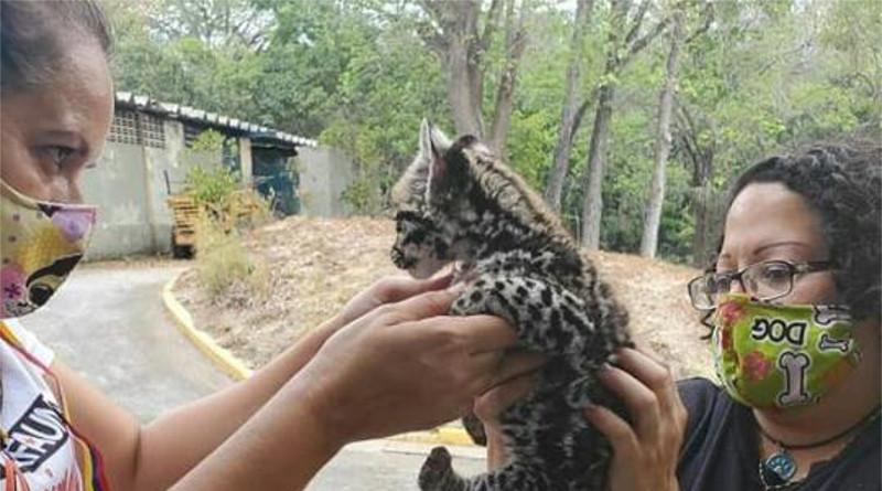 Misión Nevado constató condiciones de salud de animales en zoológicos de Caracas