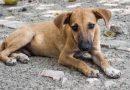 Venezuela avanza en la protección de los derechos de los animales