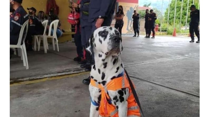 Bomberos de Mérida ascendieron a Dominó, su perro Dálmata