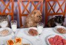 Alimentos para mascotas: ¿mejor comida casera o industrial?