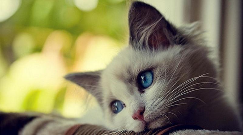 ¿Cómo los gatos demuestran su amor?