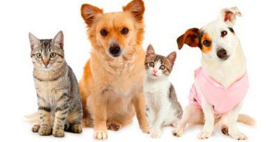 Aproa invita a desparasitar los animales gratis