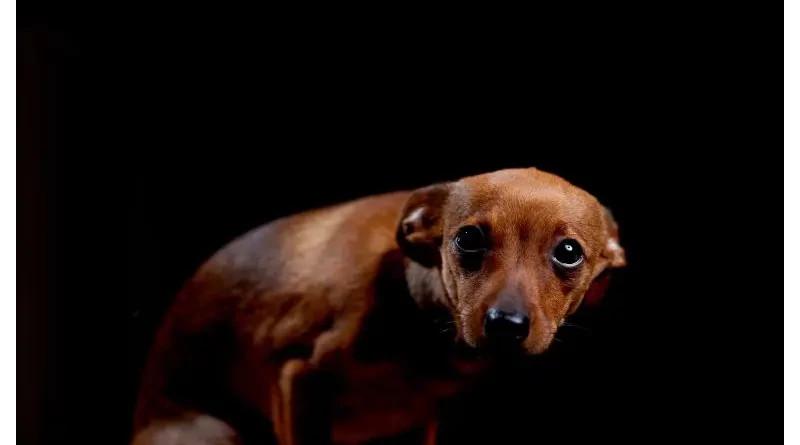 Pirotecnia: ¿Cuánto y cómo afecta a los animales?