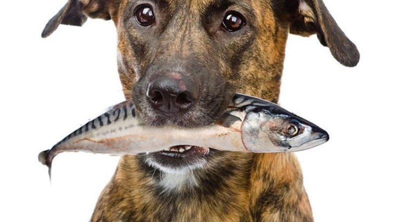 ¿Es bueno o malo que los perros coman pescado?