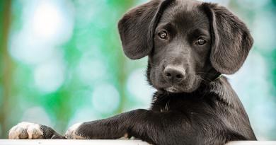 Una deuda de los humanos con los animales domésticos
