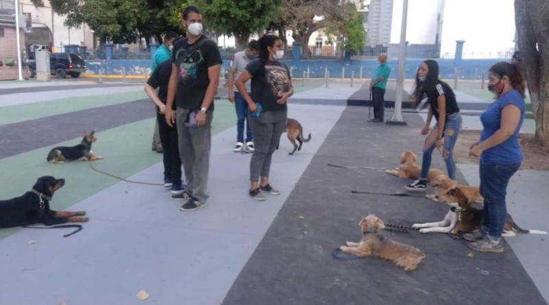 APROA dicta clases de obediencia de perros gratis