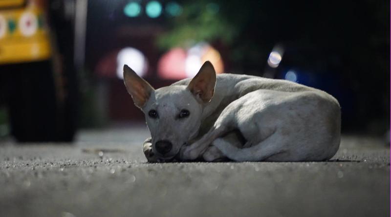 Día Internacional del Perro Callejero: 70% de los perros no tienen hogar