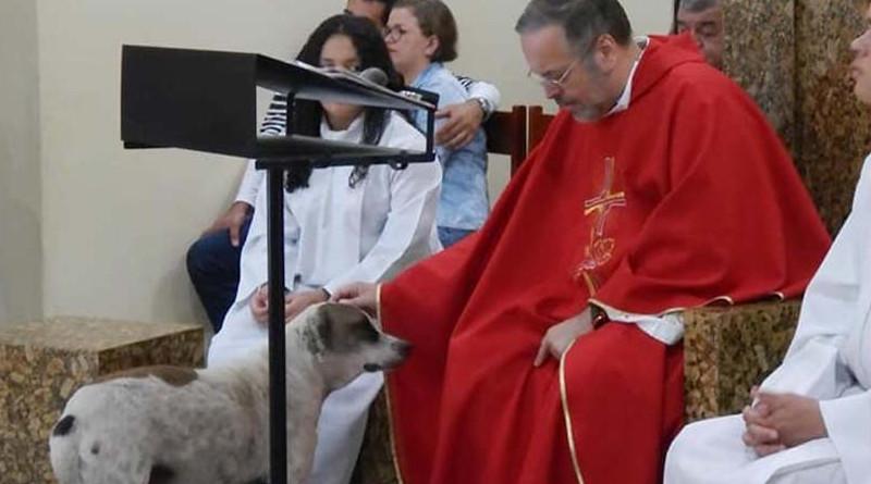 Cura convierte a iglesia en refugio para perros y los da en adopción en las misas